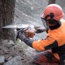"""""""Ritorno al bosco"""" sul canale TouTube di Regione Lombardia"""