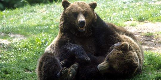 2° weekend Pro Natura sulle tracce dell'orso