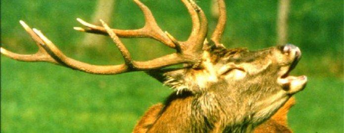 """Ascoltare """"Il bramito dei cervi"""" in Valgrigna"""