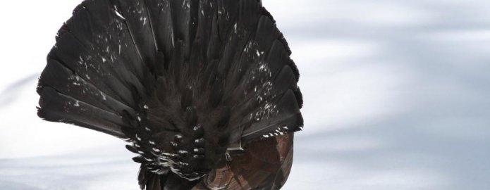 Lunedì di Valgrigna: si parla di fauna con Massimo Ragusa