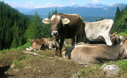 """""""Miglioramento e qualificazione del latte di montagna in Valle Camonica"""""""