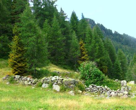 Boschi della Val Grigna